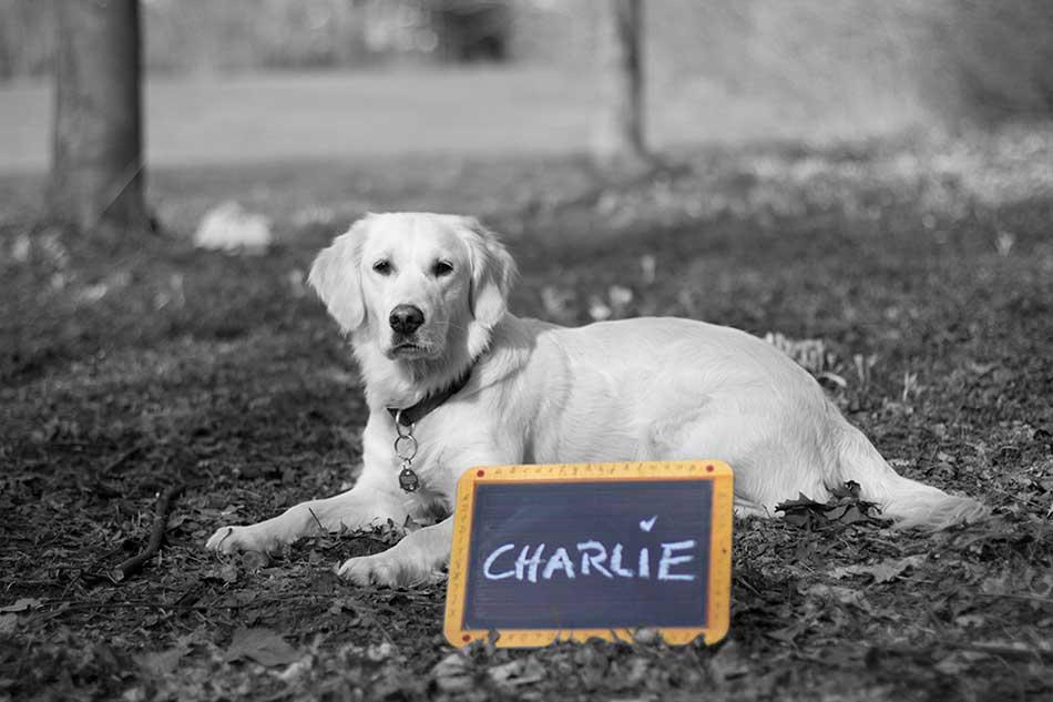 CHARLIE, Begleitpersonal