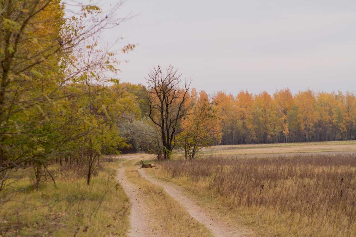 Istvan1-Reh-auf-Weg
