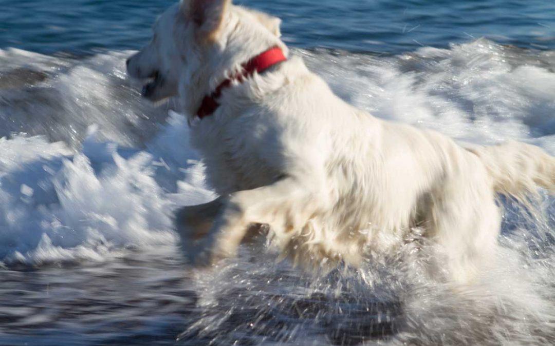 Achtung: An alle im Mittelmeerraum Reisenden mit Hund