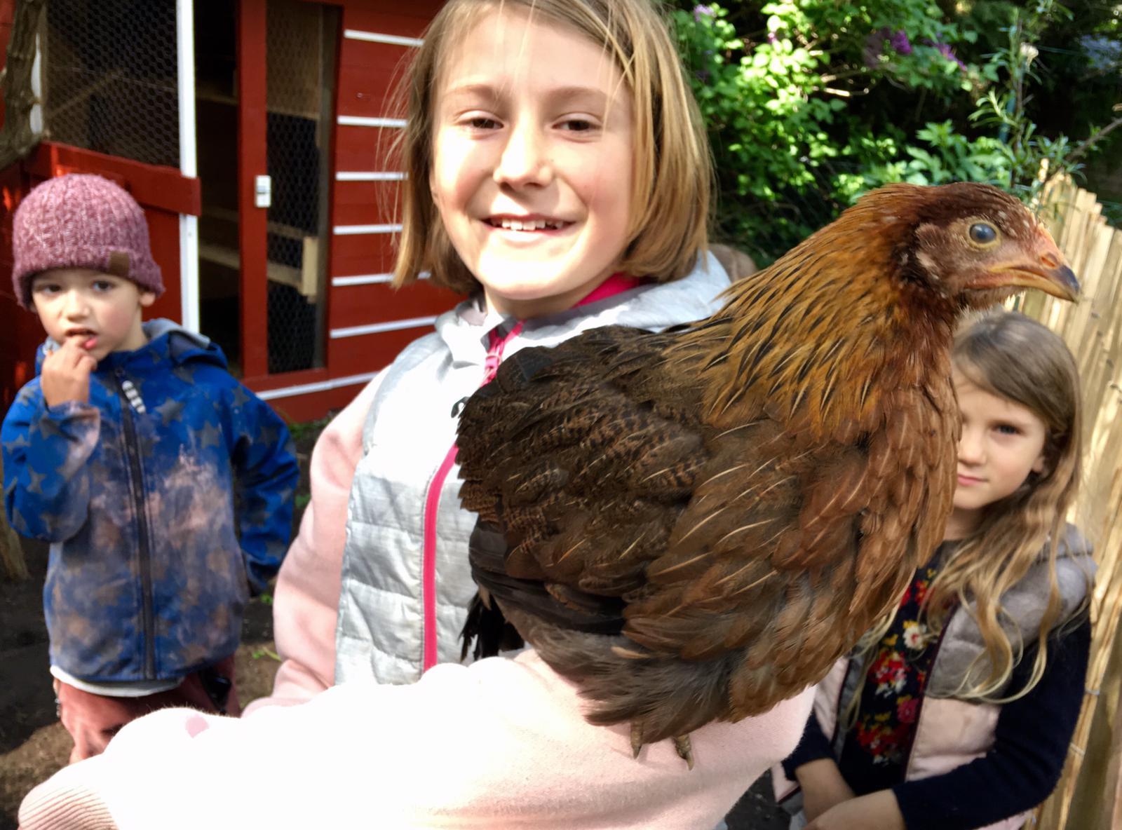 Gänseblümchenattraktion. Die Hühner waren monatelang die Attraktion der Straße. Heute hat sich der Trubel um's Huhn gelegt.